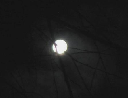 12202010-moon