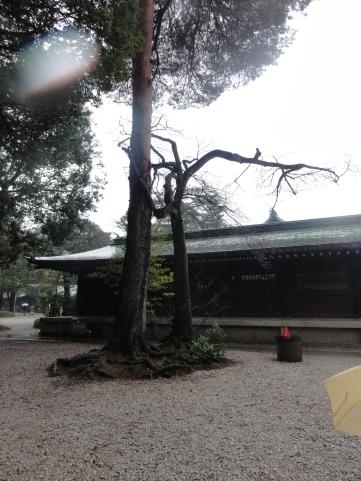 04222019 Dancing Trees Tokyo